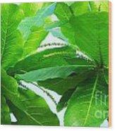 Tropical Noni Leaves Wood Print