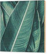 Tropical Palm Leaf, Dark Green Toned Wood Print