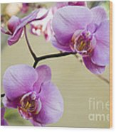 Tropical Radiant Orchid Flowers Wood Print