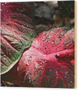 Tropical Rain - Botanical Art By Sharon Cummings Wood Print