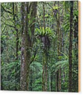 Tropical Rain Forest Wood Print