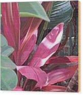 Tropical Spice Wood Print