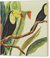 Tropical Toucans II Wood Print
