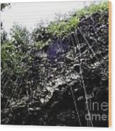Tropical Vines Wood Print