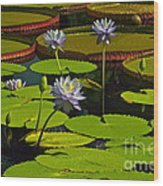 Tropical Water Lily Flowers And Pads Wood Print