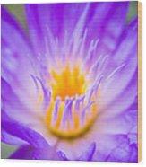 Tropical Waterlily Glow Wood Print