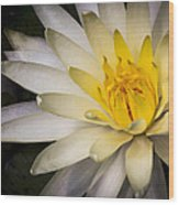 Tropical White Water Lily Wood Print
