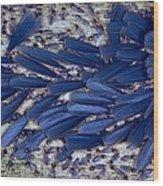 Tropical Winged Termites Wood Print