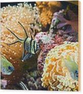 Tropical Wonderland - Banggai Cardinalfish Wood Print