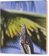 Tropical Woodpecker Wood Print