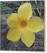 Tropical Yellow Flower Wood Print