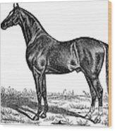 Trotting Horse Engraving Wood Print