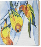 Trouble - Sun Conure Trio Wood Print