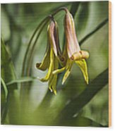 Trout Lily Flowers Wood Print