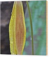 Trout Lily In The Rain Wood Print