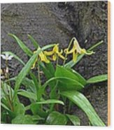 Trout Lily In The Woods Wood Print
