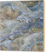 Trout Pond Abstract Wood Print
