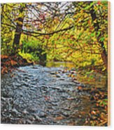 Trout Stream Wood Print