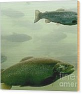 Trout Underwater Wood Print