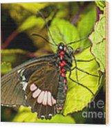 True Cattleheart Butterfly Wood Print