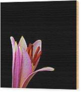 Trumpet Lily Wood Print