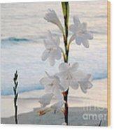 White Trumpet-shaped Flowers At Dana Point Beach California  Wood Print