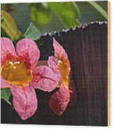 Trumpet Vine With Friend Wood Print
