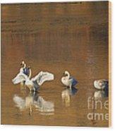 Trumpeter Ballet Wood Print