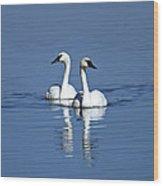 Trumpeter Swan Couple Wood Print