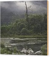 Trumpeter Swans At Sunrise Wood Print