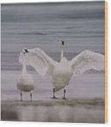Trumpeters At The Beach Wood Print