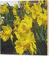 Trumpeters Of Spring Wood Print