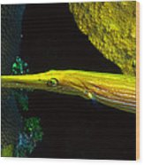Trumpetfish Wood Print