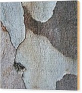 Trunk Of A Eucalyptus Tree  Wood Print