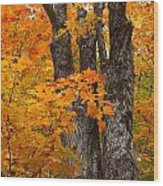 Trunks In Orange Wood Print