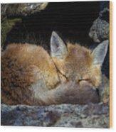 Fox Kit - Trust Wood Print