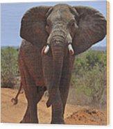Tsavo Elephant Wood Print