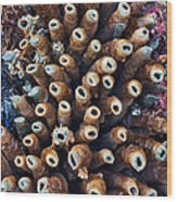Tube Worms Wood Print