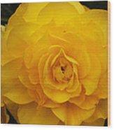 Tuberous Begonia Wood Print