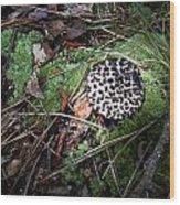 Tufted Mushroom Showing Wood Print