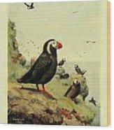 Tufted Puffin Circa 1913 Wood Print
