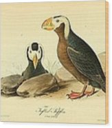 Tufted Puffins Wood Print by Philip Ralley