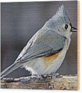 Tufted Titmouse Animal Portrait Wood Print by A Gurmankin