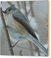 Tufted Titmouse Male Wood Print