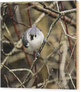 Tufted Titmouse On The Watch Wood Print