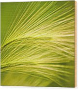 Tufts Of Ornamental Grass Wood Print