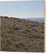 Tules Elks Of Tomales Bay California - 5d21276 Wood Print
