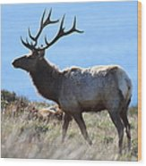 Tules Elks Of Tomales Bay California - 7d21218 Wood Print