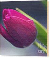 Tulip 2a Wood Print
