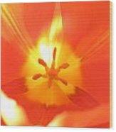 Tulip 5 Wood Print